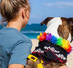 Aloha for Animals